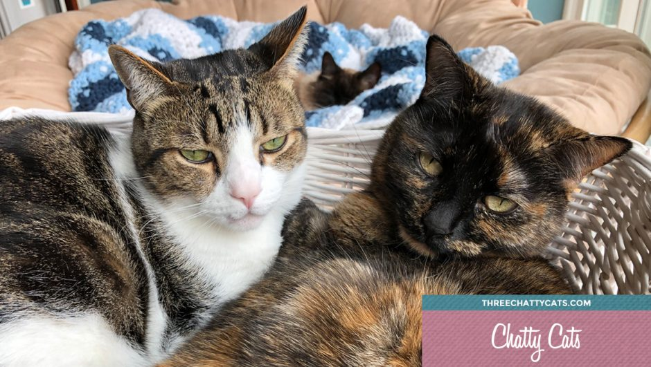 tabby cat and tortie cat cuddling