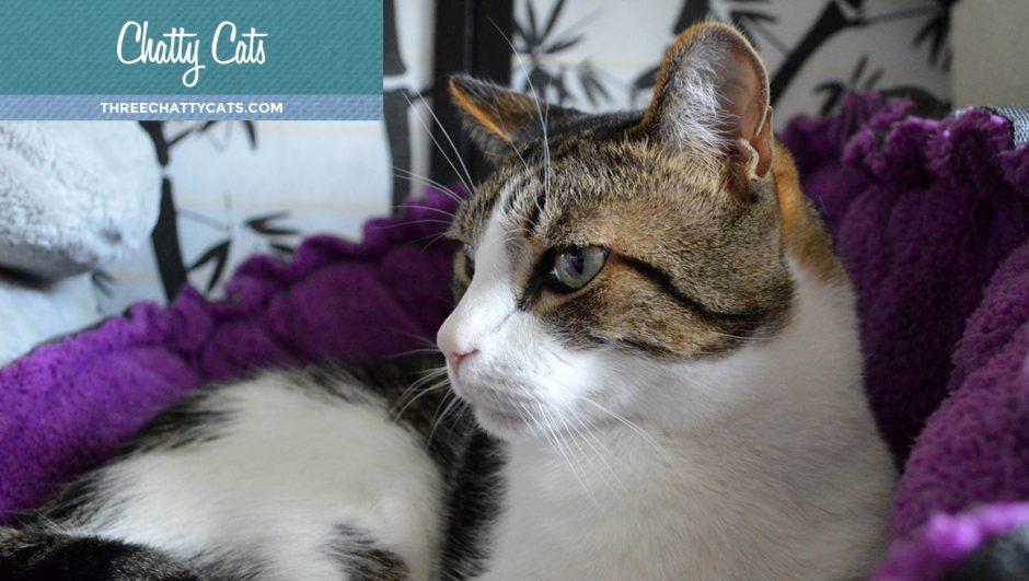 Weekly Chats at Three Chatty Cats