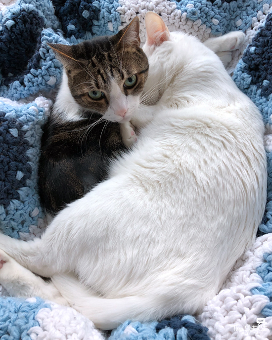 white cat and tabby cat cuddling