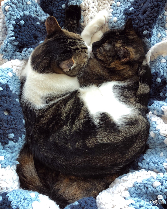 tabby cat laying on top of tortie cat