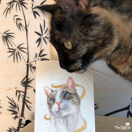 tortie cat with tabby cat portrait