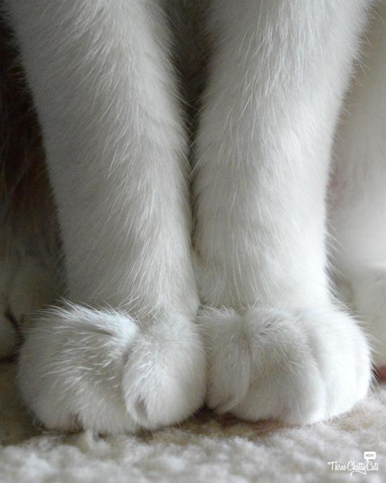 white cat paws