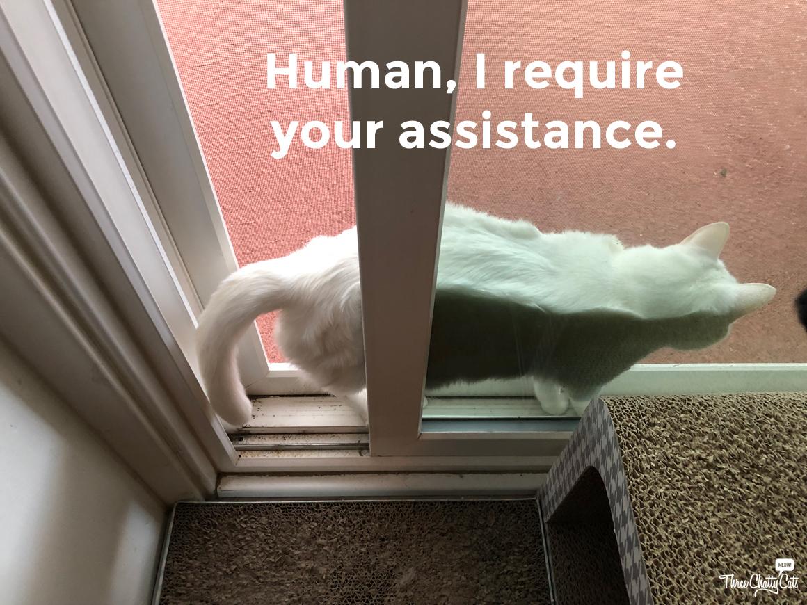 white cat stuck between door and screen