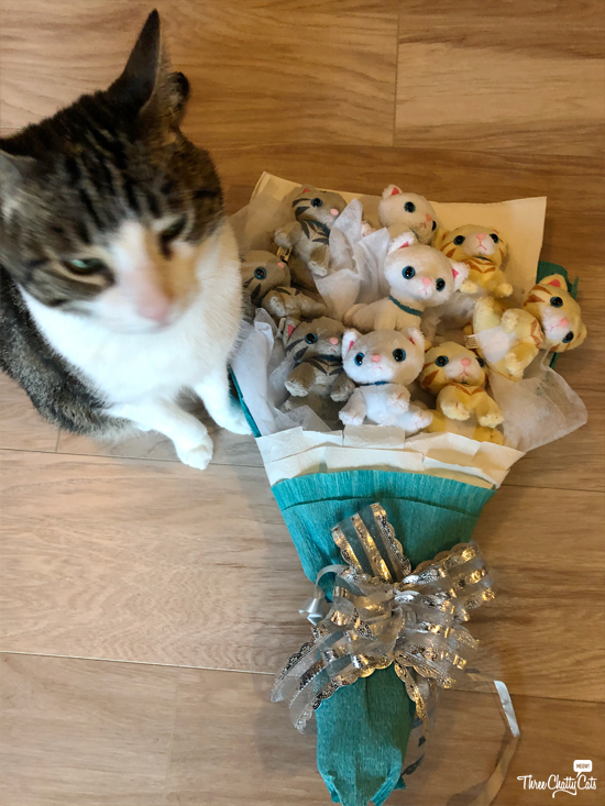 blooper shot of tabby cat with bouquet of kittens