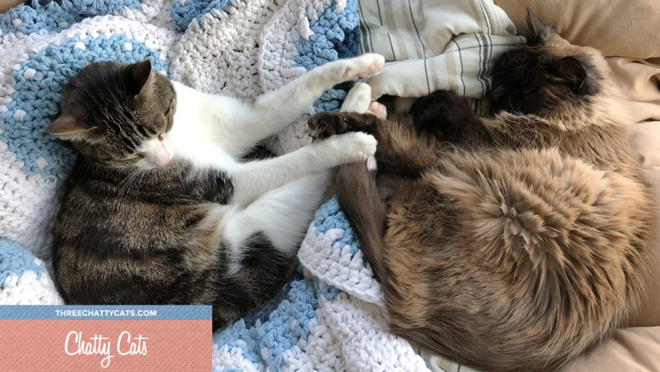 two cats touching paws