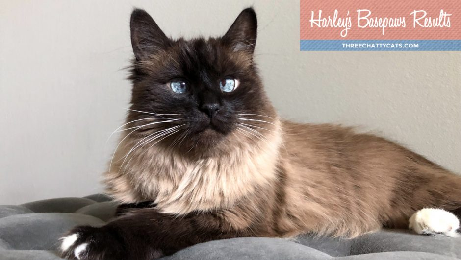 Harley's Basepaws Results | Three Chatty Cats