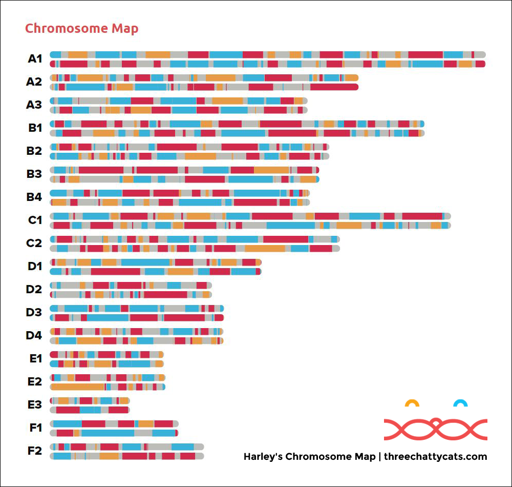 Harley's Chromosome Map | threechattycats.com