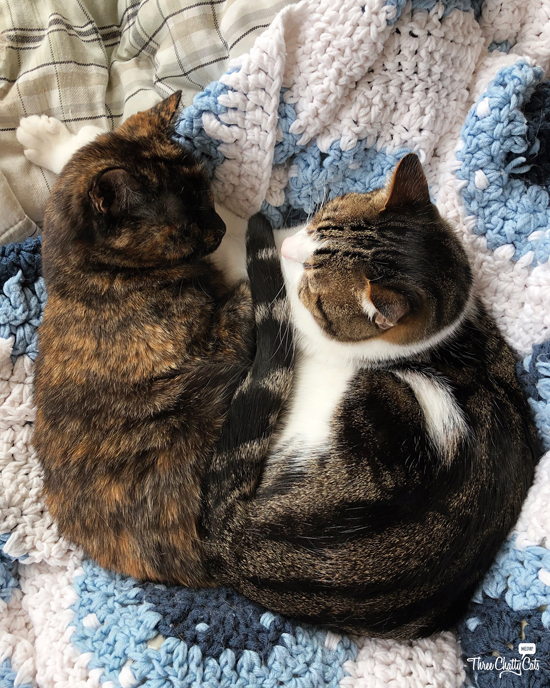 tortie cat and tabby cat cuddling