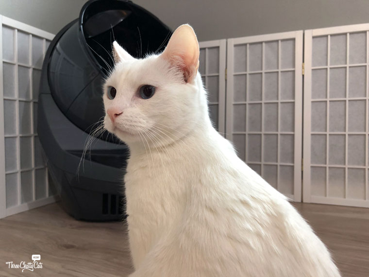 white cat in front of Litter-Robot 3 Connect