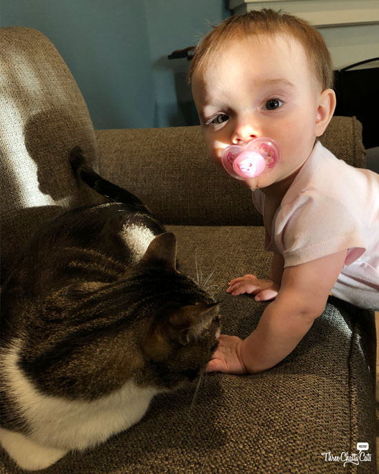 tabby cat meets baby