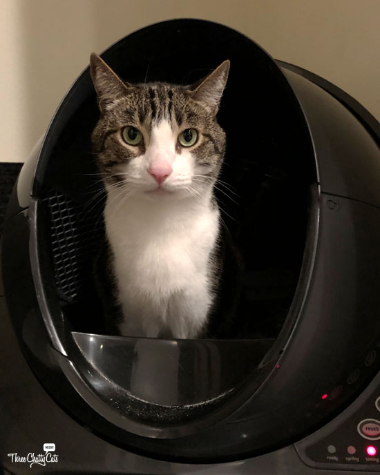 tabby cat using Litter-Robot 3 Connect