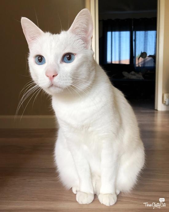 white cat peering into room