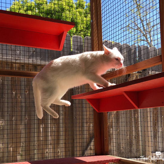 white cat jumping in catio
