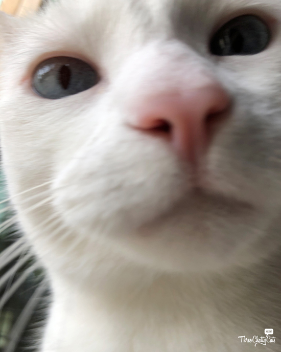 white cat closeup blooper photo