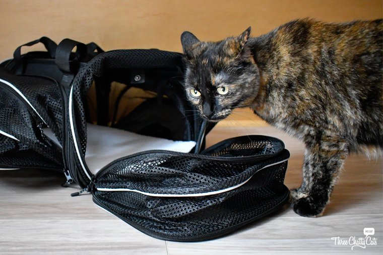 tortie cat investigates Smiling Paws Pets Expandable Pet Carrier
