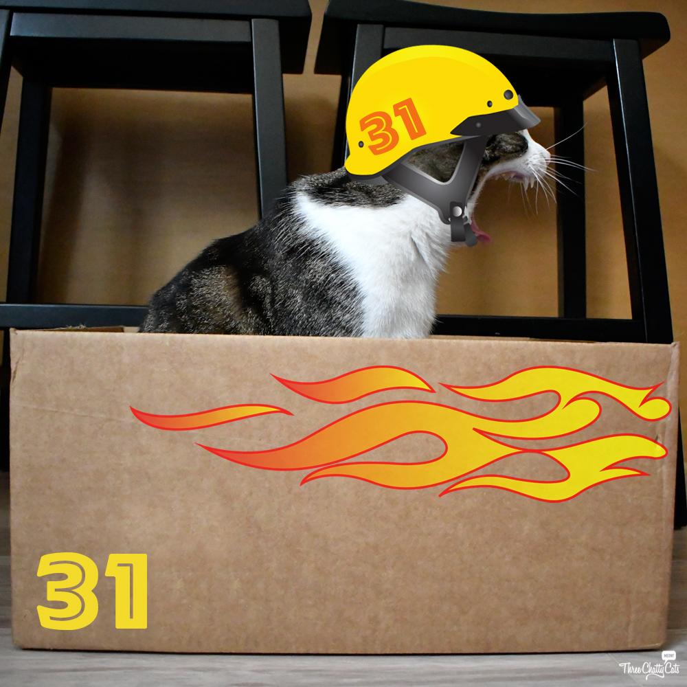 tabby cat in racecar