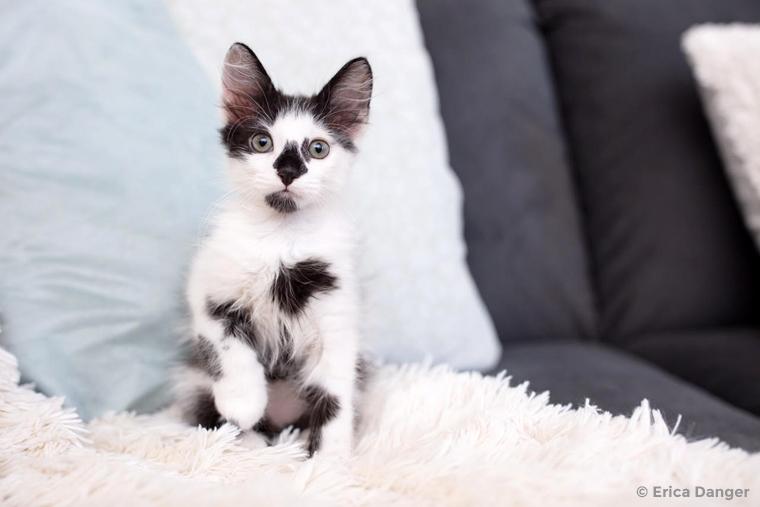 adorable black and white kitten | Photo Credit: Erica Danger ericadanger.com