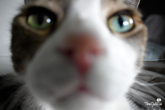 blooper closeup of tabby cat
