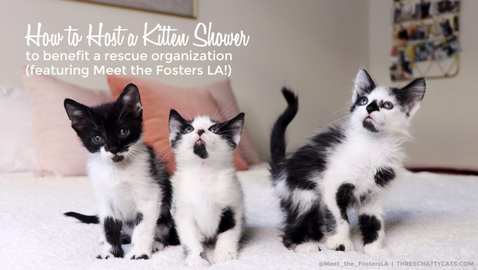 How to Host a Kitten Shower to benefit a rescue organization (featuring Meet the Fosters LA!)