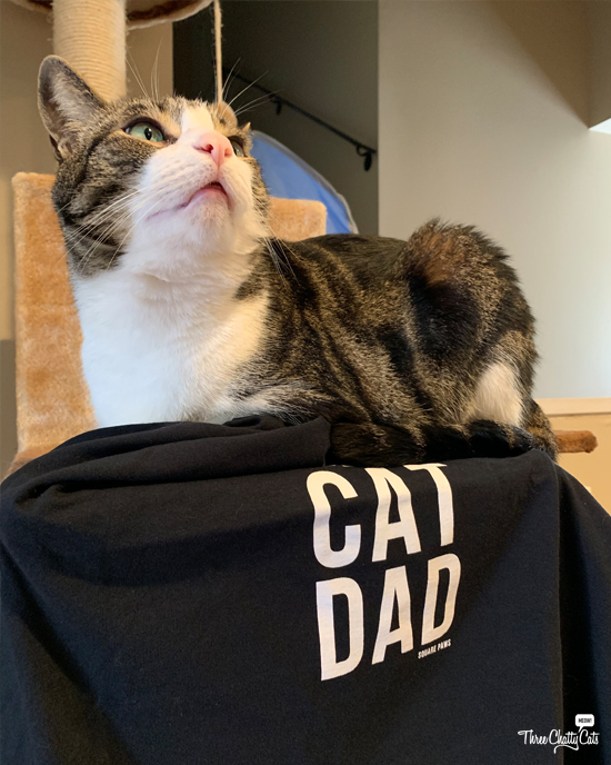 tabby cat with cat dad t-shirt from CatCon 2019