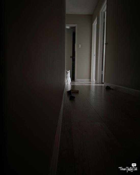 creepy white cat