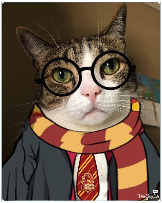 harry potter tabby cat