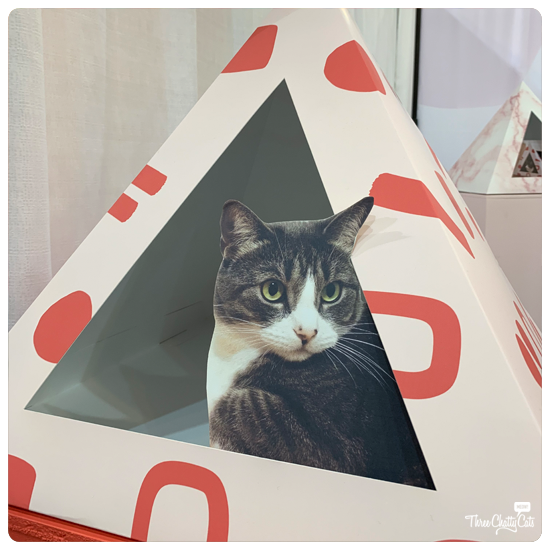 Kitty Kardboard at CatCon 2019
