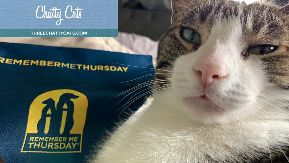 tabby cat with #RememberMeThursday scarf