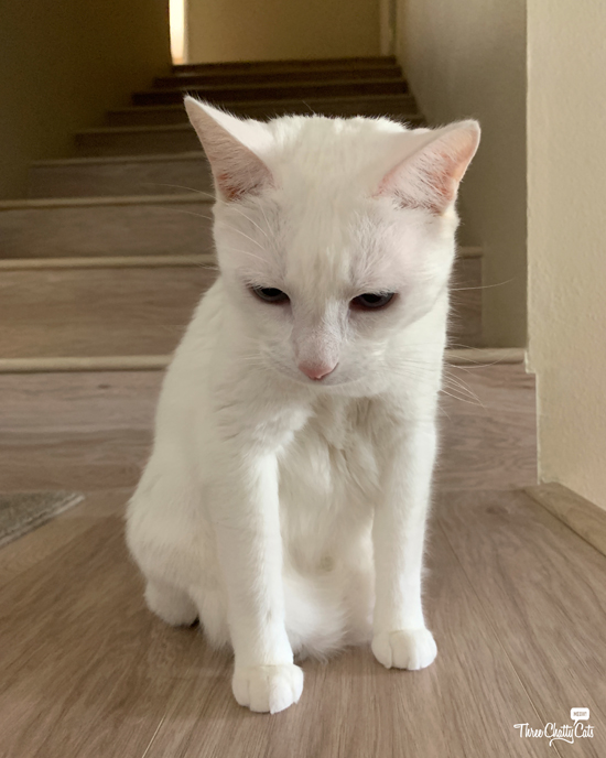 sad white cat sitting on stairs