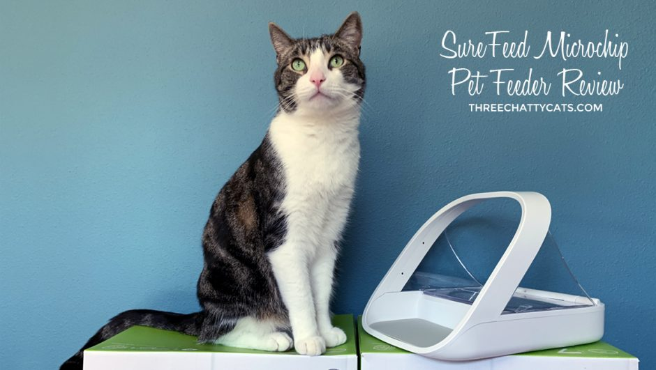 tabby cat sitting next to SureFeed Microchip Pet Feeder