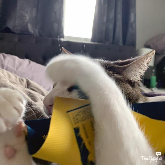 tabby cat blooper