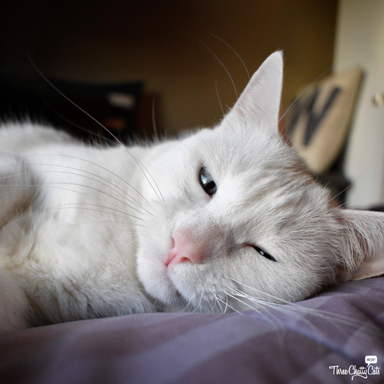 silly white cat
