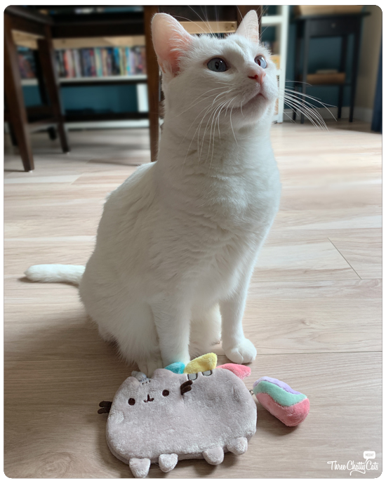 adorable white cat with pusheen purse