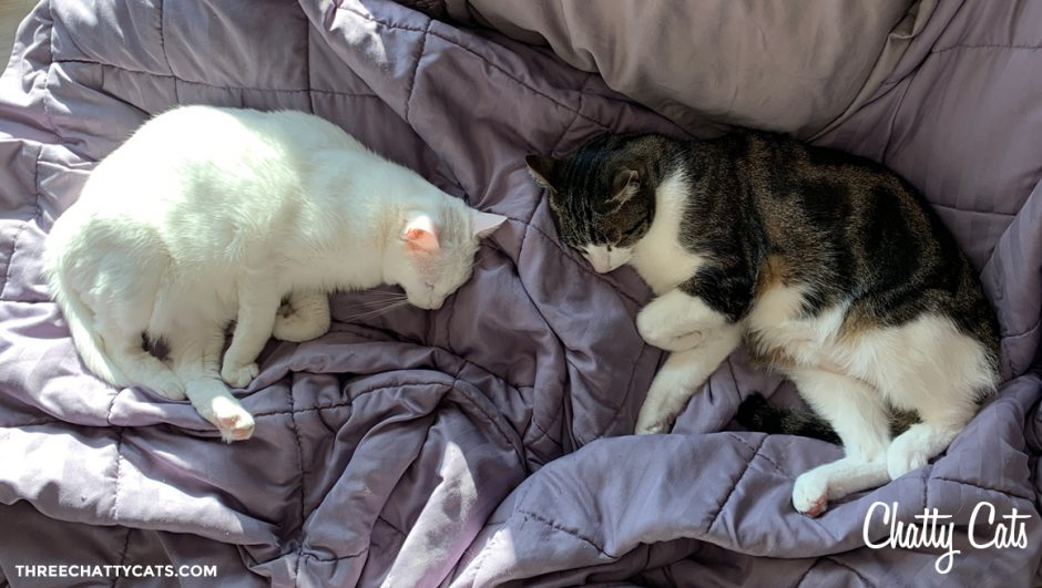 white cat and tabby cat sleeping