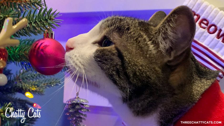 tabby cat sniffs christmas ornament