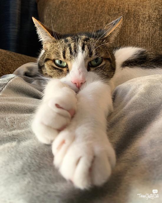 grumpy tabby cat