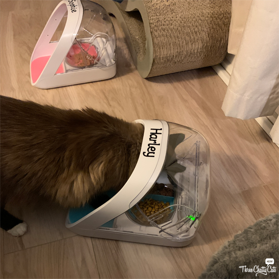 cat eats from pet feeder