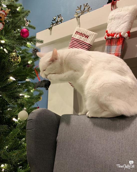 white cat attacks Christmas ornament