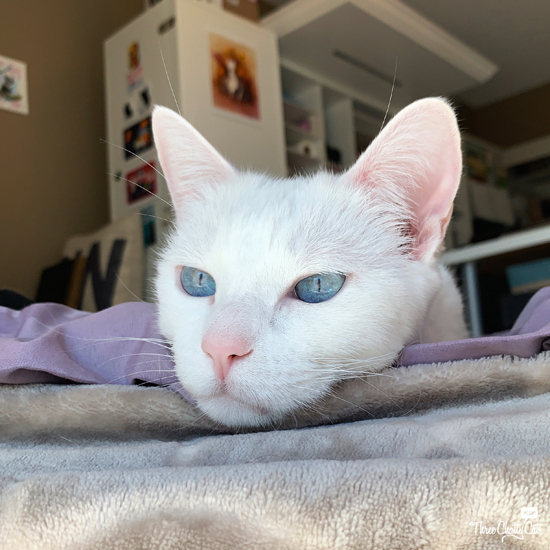 bored white cat