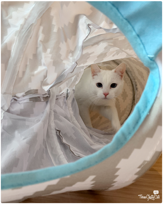 cute white cat walking in cat tunnel