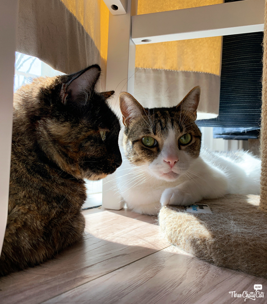 tortie cat and tabby cat under stool
