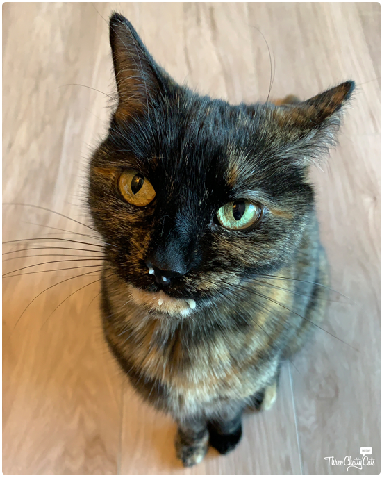 messy tortie with food on her face