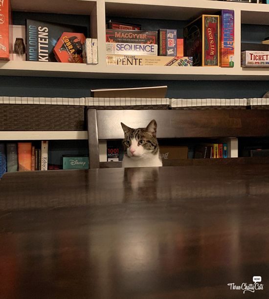 tabby cat waiting for game night