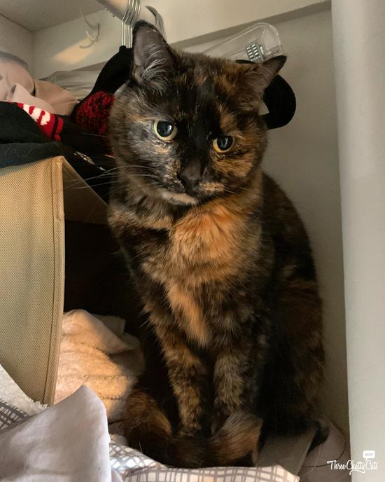 sad looking tortie cat sitting in closet