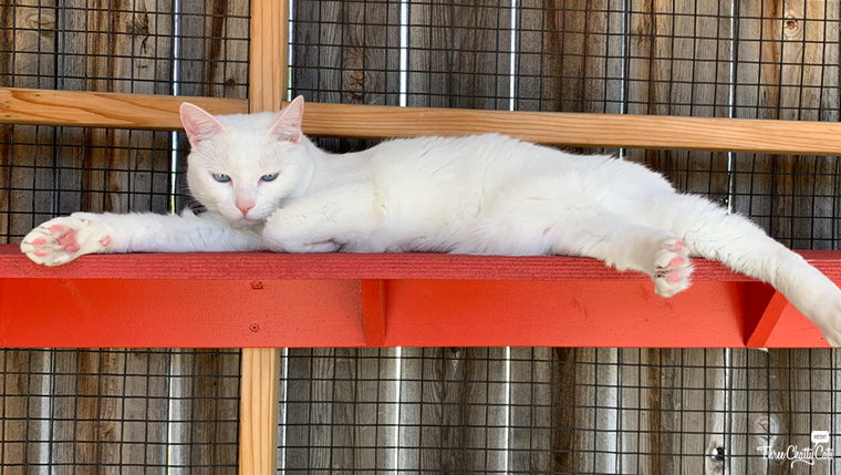 white cat lounging in catio