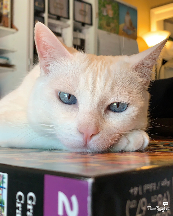 white cat with blue eyes resting on puzzle box