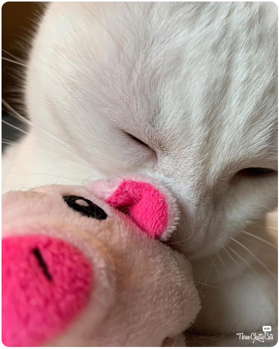 white cat with cat toy