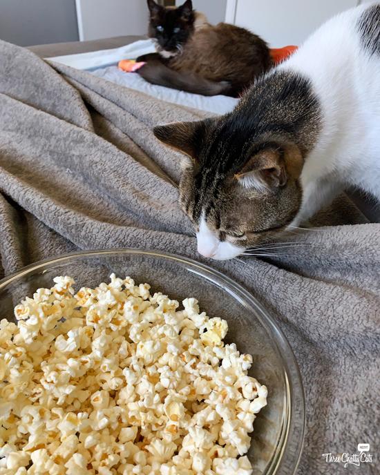 tabby cat sniffing popcorn