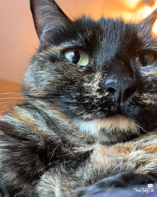 tortie cat takes selfie