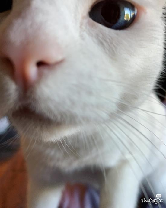 blooper close-up of white cat